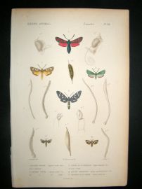 Cuvier C1840 Antique Hand Col Print. Insects 148